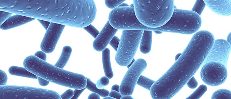Пребиотики применяются при дисбактериозе