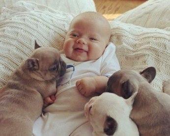 Грудной ребенок среди собачек